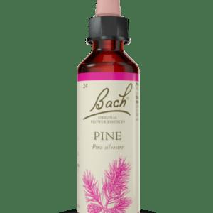 Pine N.24 - 20ml