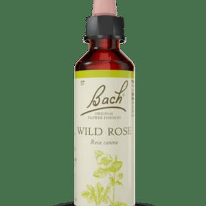 Wild Rose N.37 - 20ml